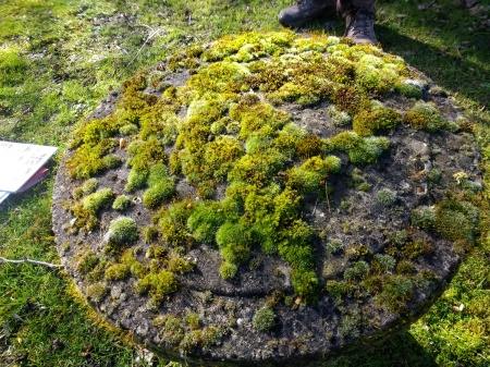 Picture of mosses on a staddle stone