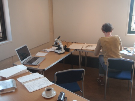 Picture of bryologist checking herbarium specimens