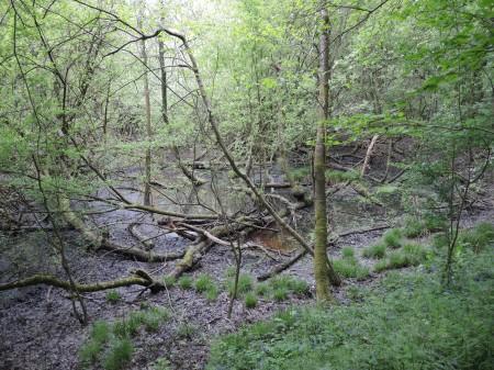 Picture of Wilderness Wood, Hurstpierpoint